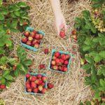 de voordelen van mulchen in de moestuin